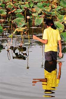 Pond-Walker